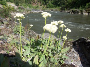Wild flowers at Wingate River Access