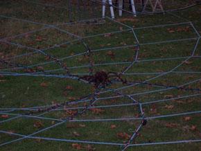 spider-290.jpg