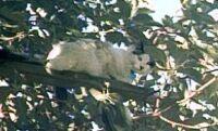 Sabrina in a tree